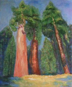 California Redwoods Donna M. 247x300 Tree Nut