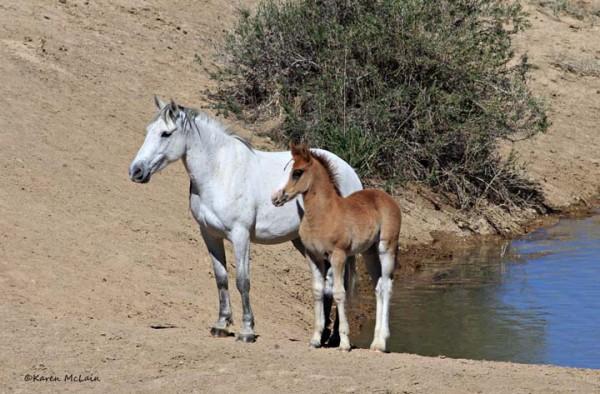 KarenMcLain-Mare foal