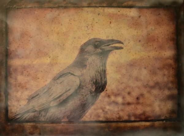 Raven Boy II
