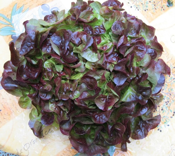 Market day lettuce